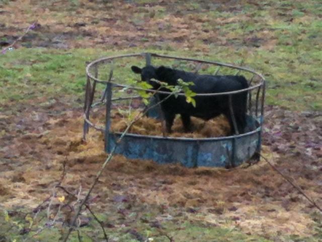 Homemade Livestock Feeders