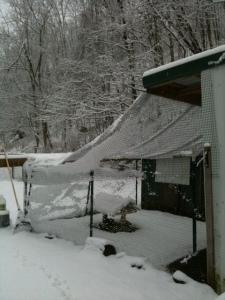 Snowy coop.