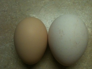 Turkey egg is the white egg.